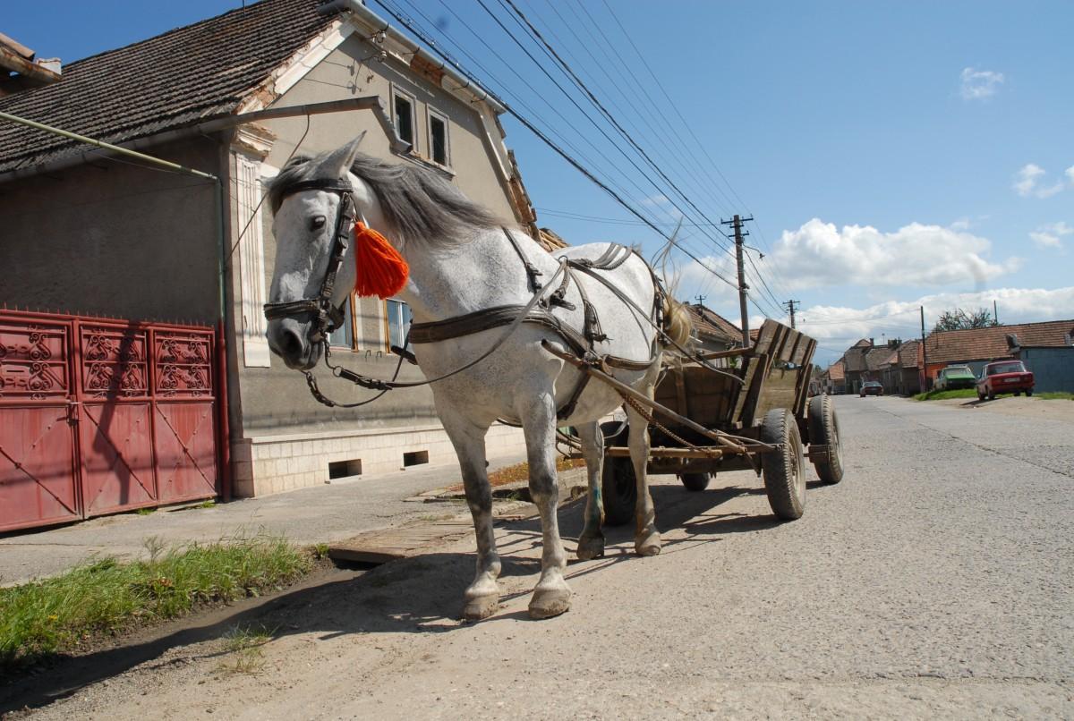 Poliția Animalelor Sibiu, intervenție în miez de noapte la doi tineri care loveau un cal