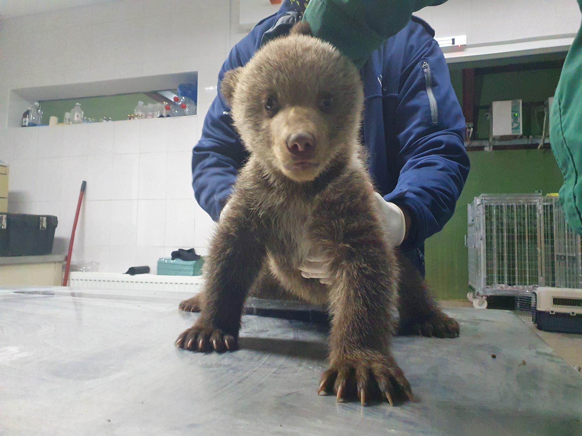 """Amenda dată pentru urșii salvați """"ilegal"""", plătită din donațiile din toată țara: """"vrem să schimbăm legea"""""""