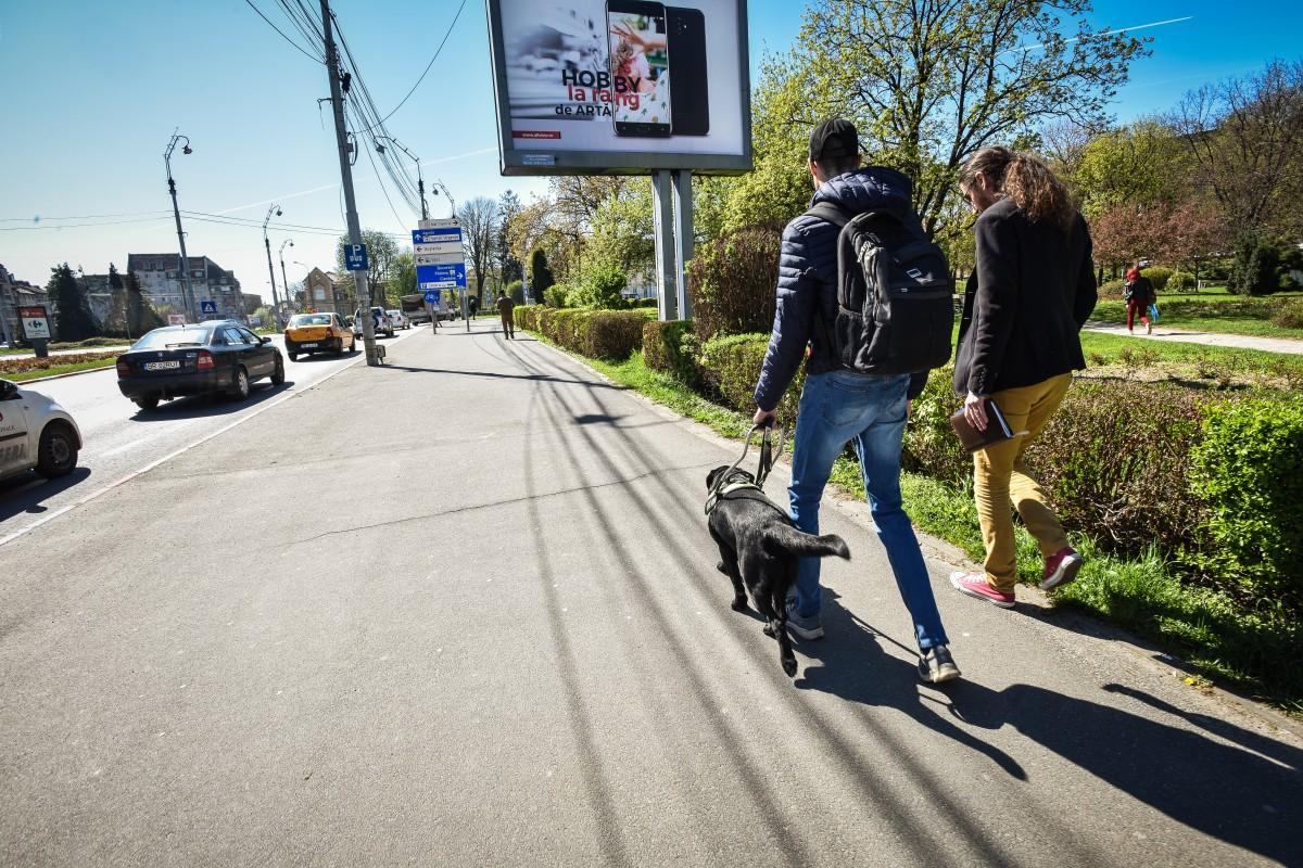 O petiție on-line a determinat un consilier local să inițieze proiectul primelor parcuri pentru câini din oraș