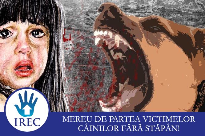 Daune de 17.000 de euro pentru o familie din Mediaș a cărei fetiță a fost mușcată de un câine