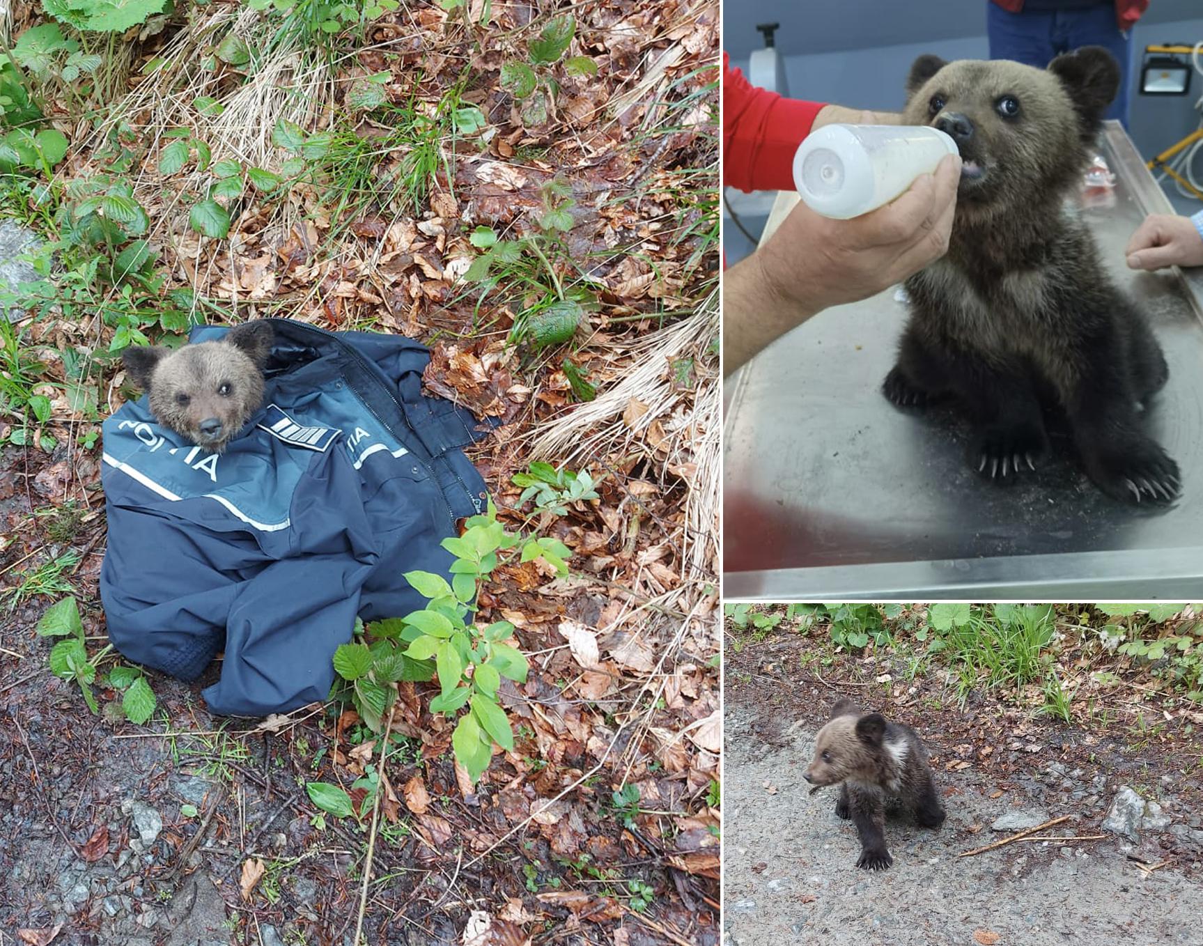 Actualizare. Puiul de urs adus la Zoo Sibiu, salvat în urma unui apel la 112