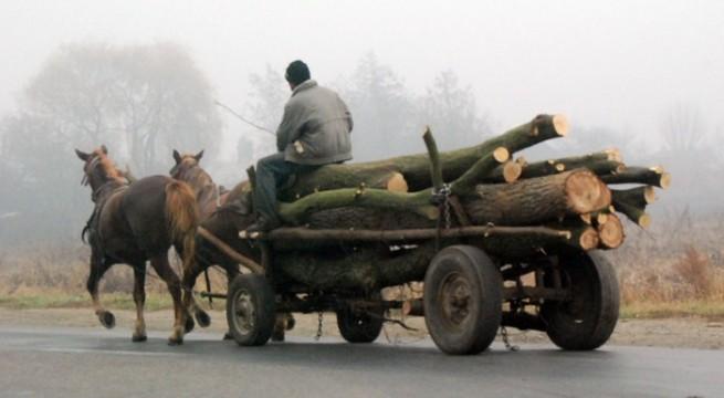 Amenzi de 12.700 de lei pentru căruțașii prinși la plimbare prin oraș, la începutul anului