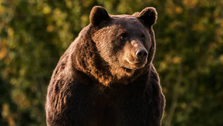 Bogdan Trif, PSD Sibiu: Coaliția de guvernare a ajuns să vândă pielea ursului din pădure. La propriu!