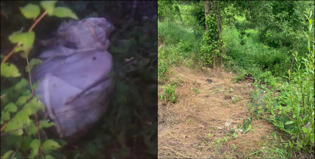 """Saci cu găini moarte găsiți între Dârlos și Valea Lungă. DSVSA: """"Este o practică frecvent întâlnită"""""""