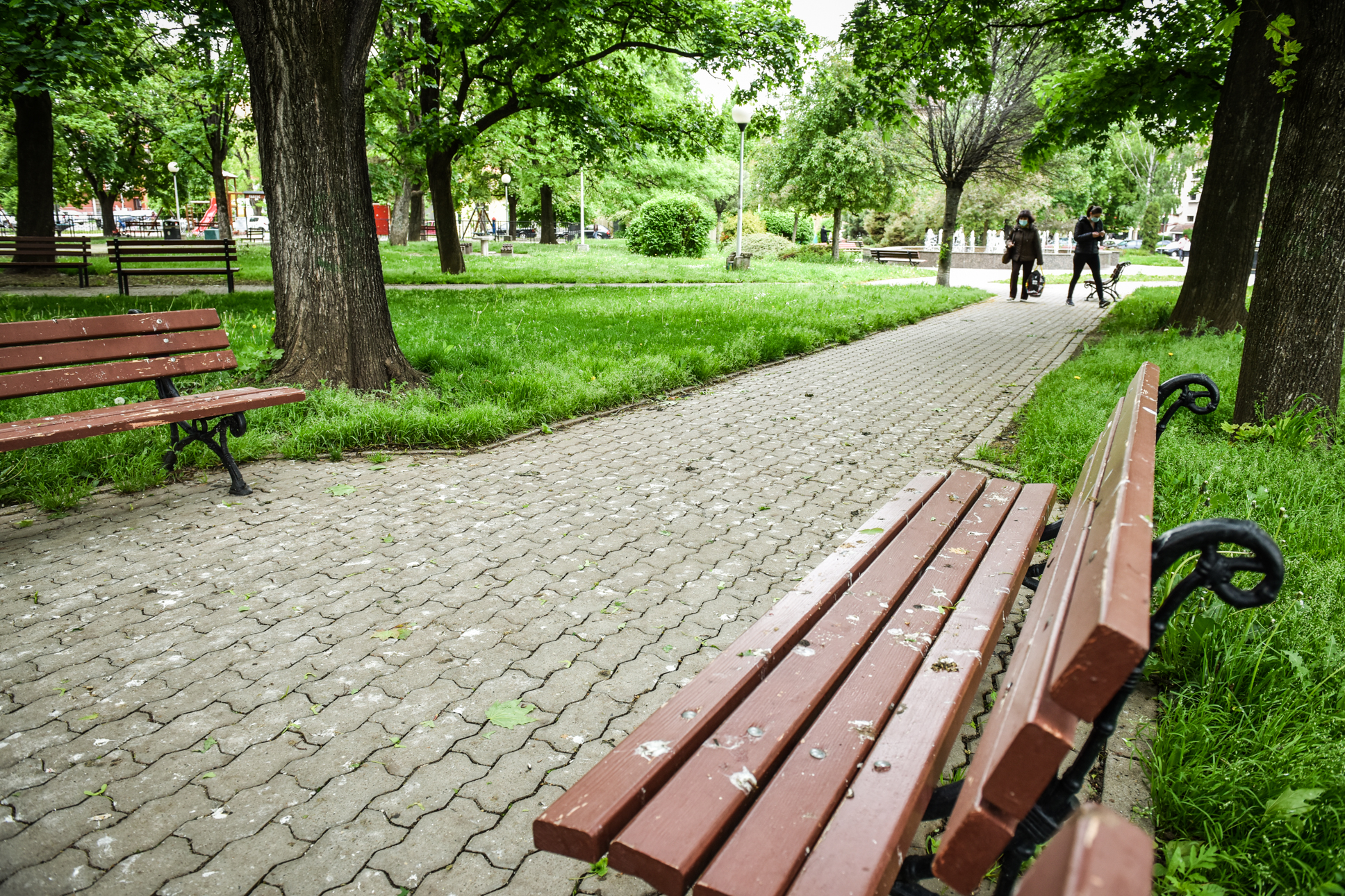 Primăria Sibiu a rămas fără soluții în fața ciorilor. Sibienii sunt nemulțumiți, vor fapte, nu hârtii