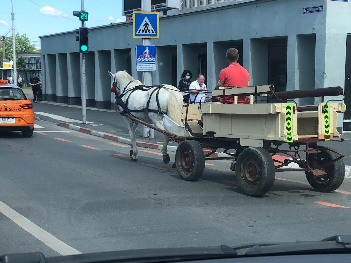 """Căruță trasă de cal, la plimbare în centrul orașului. """"Este pentru un spectacol"""""""