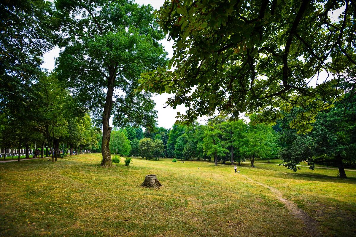 Proiectul reamenajării parcului Sub Arini, încredințat unei firme specializată în drumuri