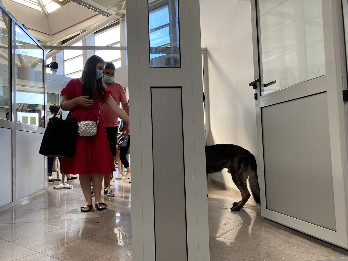 FOTO VIDEO Prima zi de muncă pentru câinii care depistează COVID, la Aeroportul Sibiu