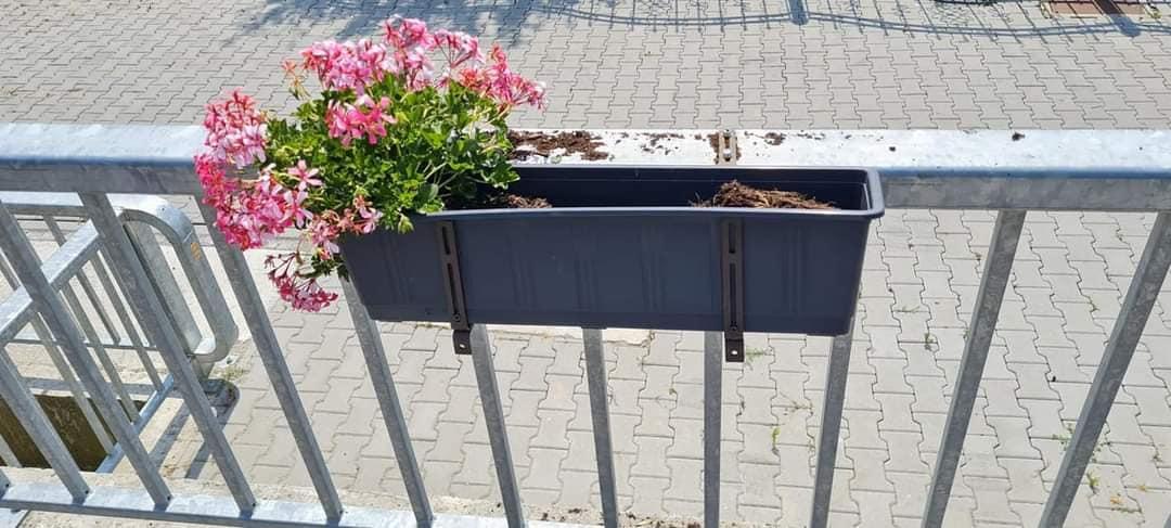 Patru tineri din Avrig, amendați după ce au rupt pomii și florile plantate pe marginea drumului