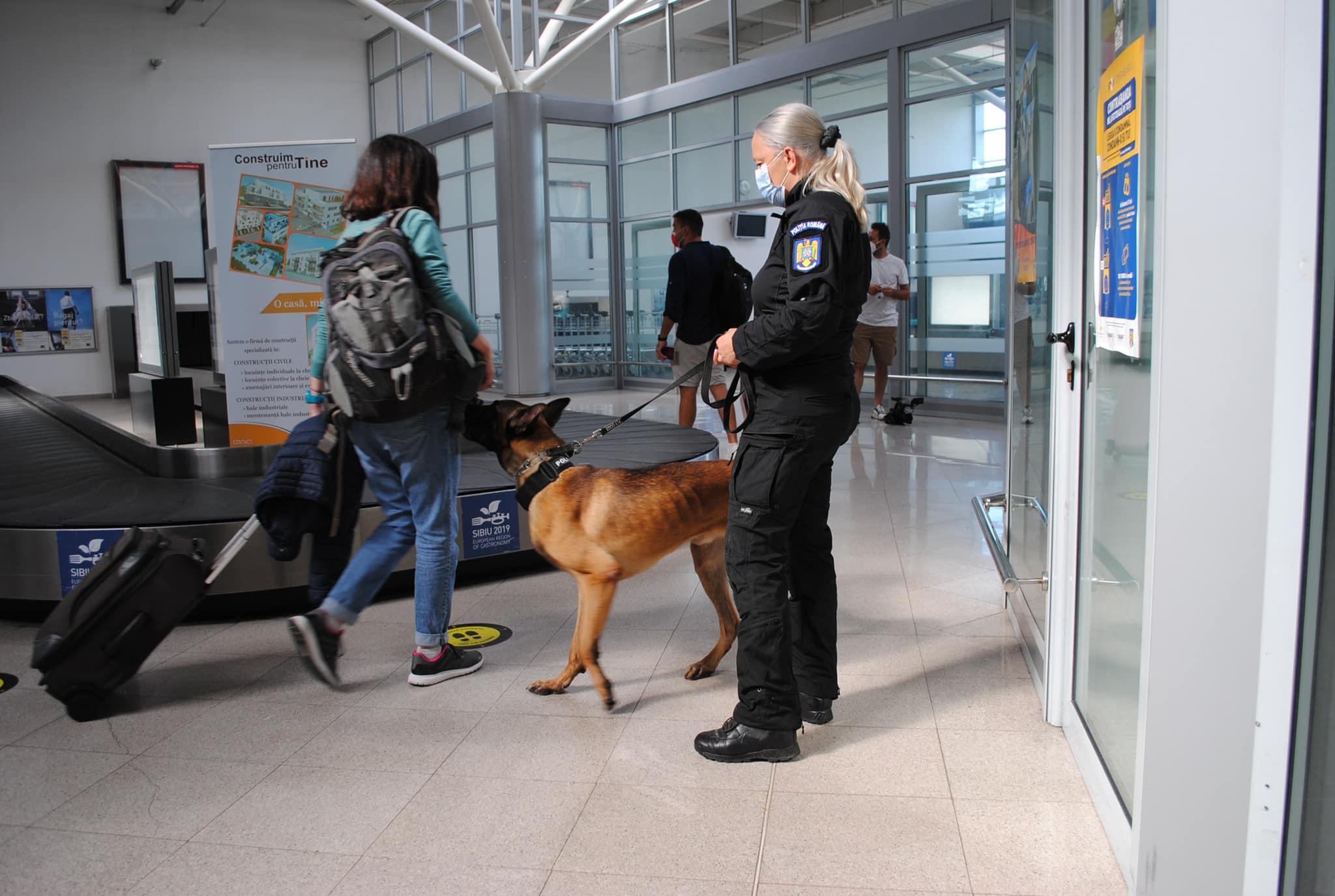 Bode: Câinii Centrului Chinologic Sibiu care detectează COVID-19 vor fi folosiți și pe alte aeroporturi