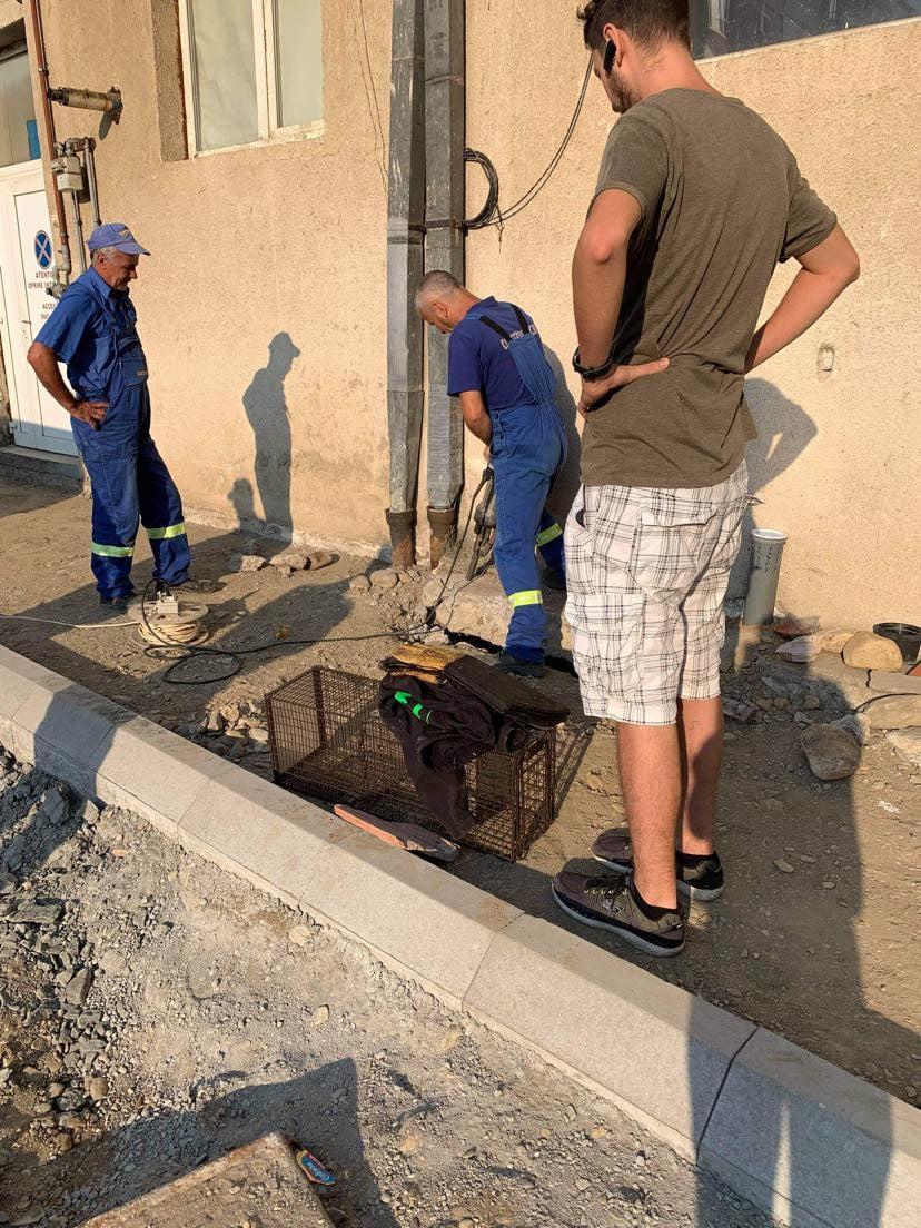 Animal Life: Intervenție de trei zile, în Terezian, pentru a salva o pisică cu doi pui