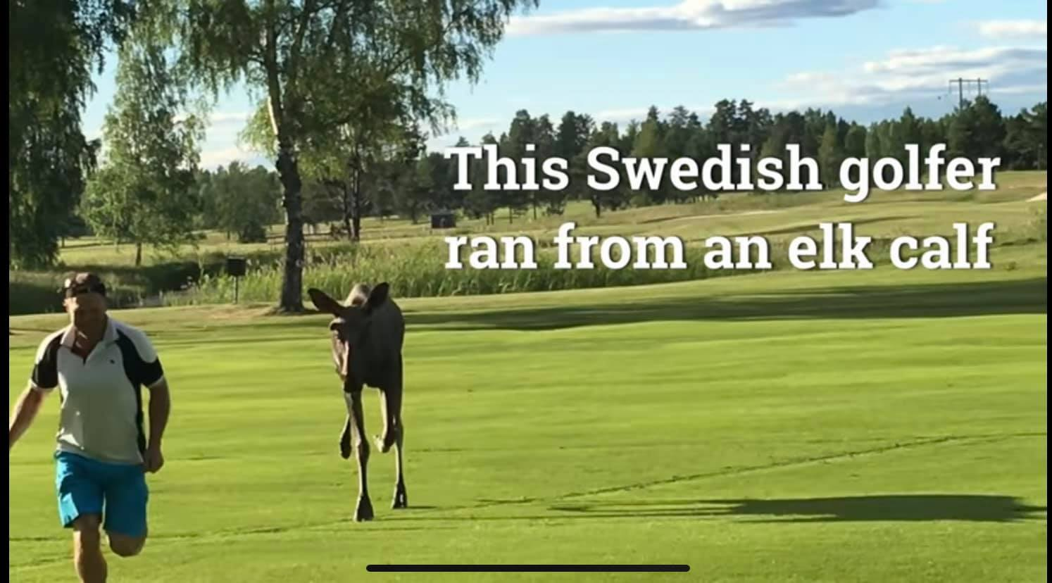 VIDEO Ambasadei Suediei la Bucureşti după ce Iohannis a îndemnat la practicarea golfului: doar dacă faci și jogging!
