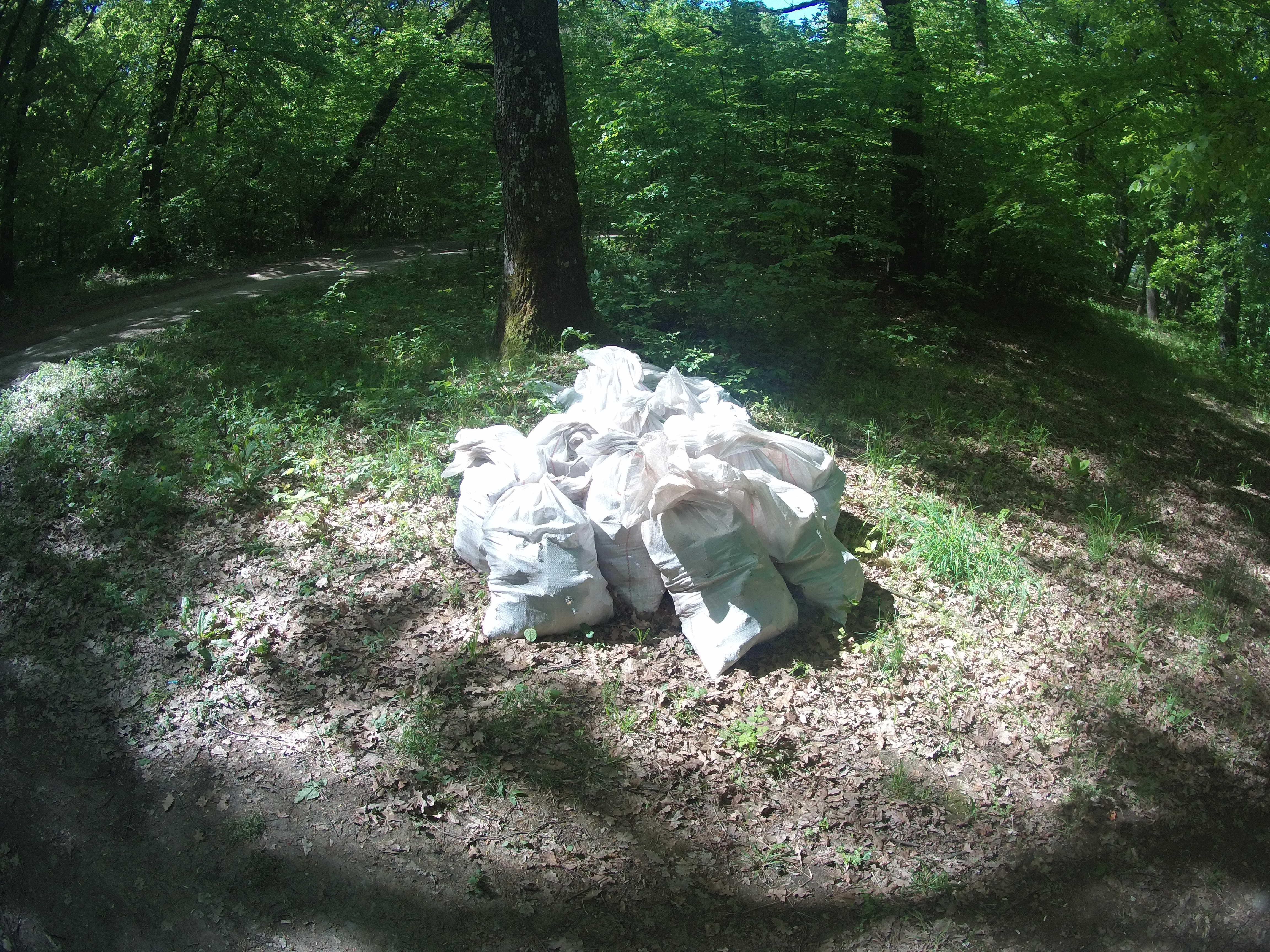 Acțiune de ecologizare sâmbătă în Pădurea Dumbrava. Toți sibienii sunt bineveniți